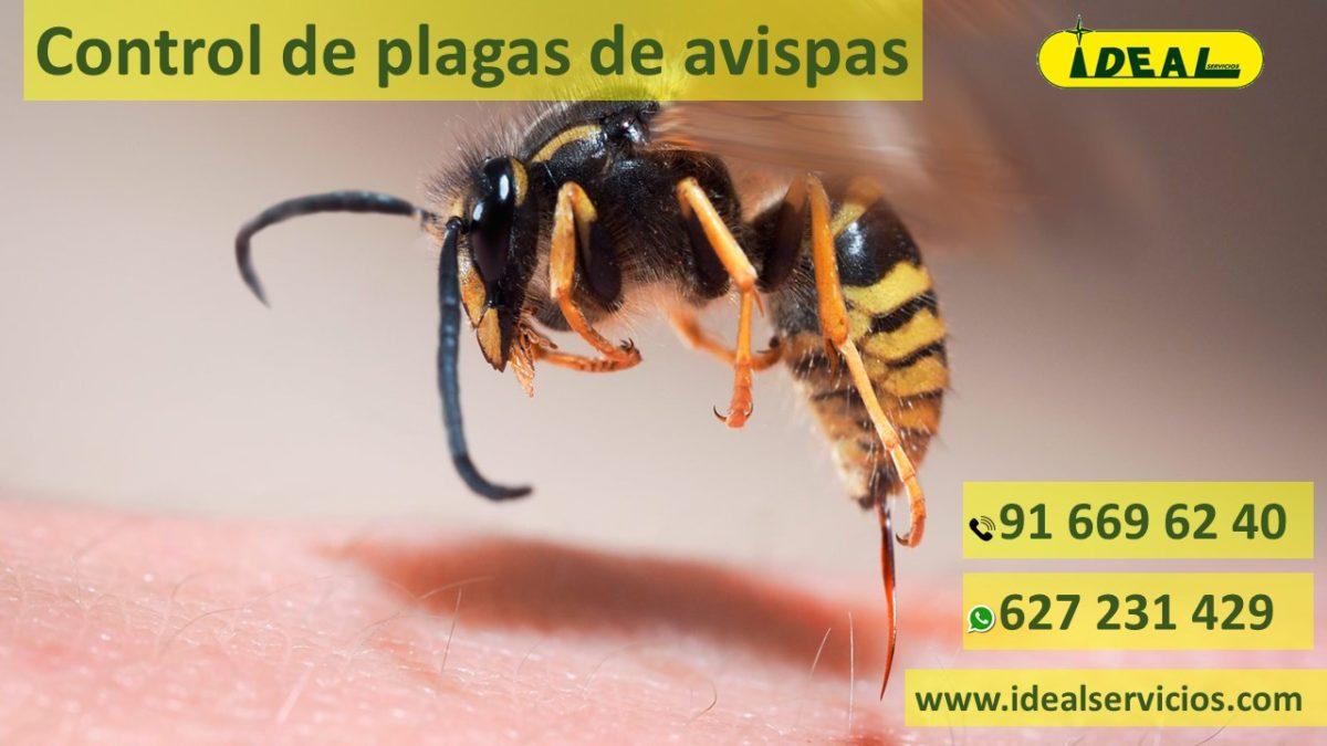 Empresas de control de plagas de Avispas en Madrid