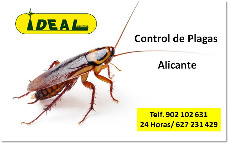 Empresas de control de plagas en Alicante