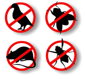 Control de plagas en Madrid Chinches-cucarachas