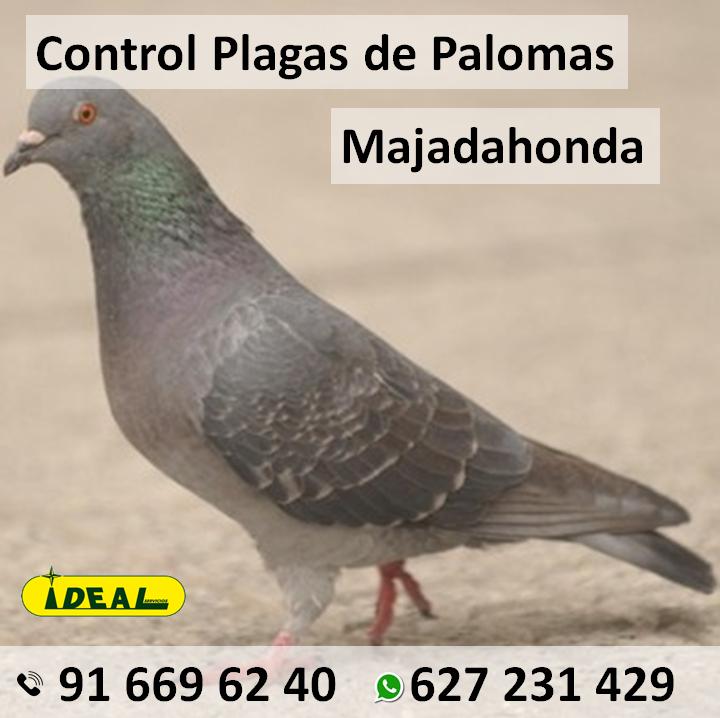 Empresas económicas de Control de plagas de palomas en Majadahonda